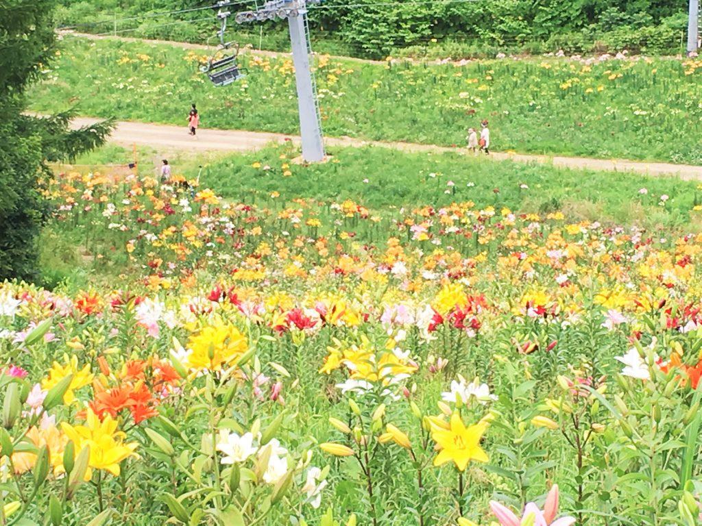 オーンズ春香山ゆり園6