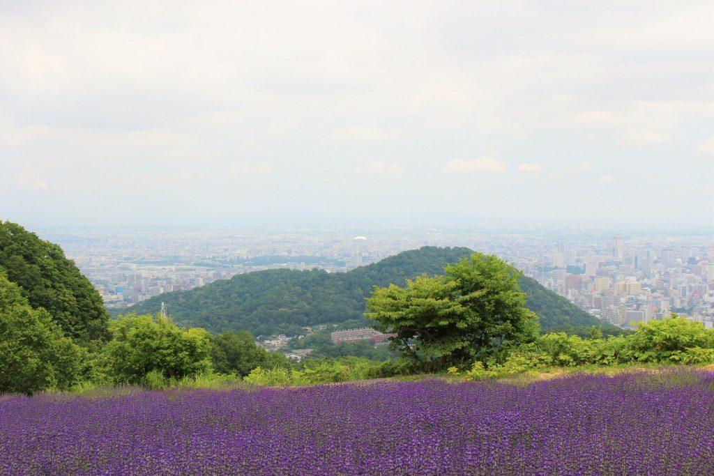 幌見峠ラベンダー12 (2)