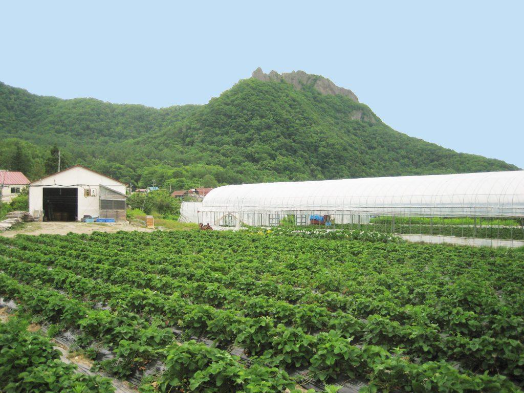 苺畑と八剣山1