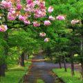 神々しい静謐さが漂うスピリチュアルスポット「知内公園」~姥杉と荒神社の黒松~(1)