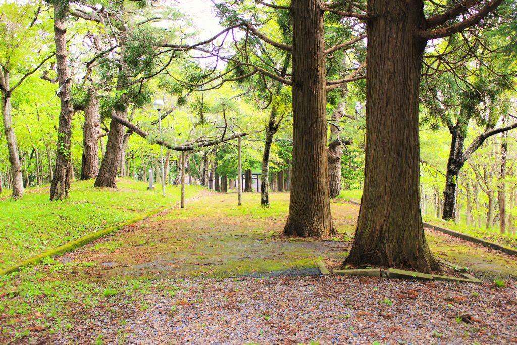 荒神社への道2